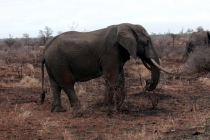 Sudafrica_2456_ZA_KrugerNationalPark_SunriseGameDrive