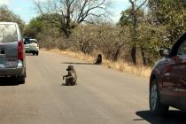 Sudafrica_2644_ZA_KrugerNationalPark