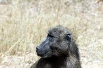 Sudafrica_2646_ZA_KrugerNationalPark