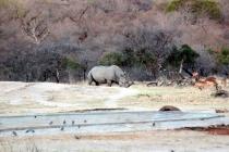 Sudafrica_2798_ZA_KrugerNationalPark_SunsetGameDrive