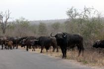 Sudafrica_2834_ZA_KrugerNationalPark