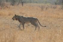 Sudafrica_3014_ZA_KrugerNationalPark