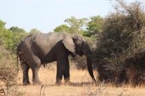 Sudafrica_3094_ZA_KrugerNationalPark