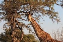 Sudafrica_3101_ZA_KrugerNationalPark
