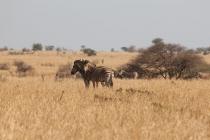 Sudafrica_3213_ZA_KrugerNationalPark