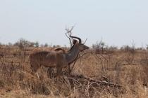 Sudafrica_3246_ZA_KrugerNationalPark