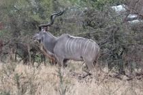 Sudafrica_3645_ZA_KrugerNationalPark