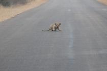 Sudafrica_3716_ZA_KrugerNationalPark