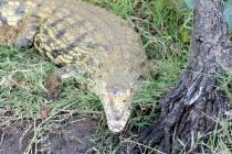 Sudafrica_1782_ZA_iSimangaliso_StLucia_Hippo&CrocBoatCruise