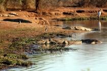 Sudafrica_2295_ZA_KrugerNationalPark