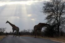 Sudafrica_2837_ZA_KrugerNationalPark