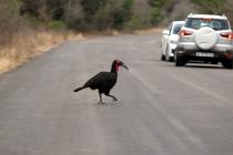 Sudafrica_2845_ZA_KrugerNationalPark