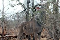 Sudafrica_2857_ZA_KrugerNationalPark