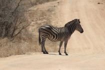 Sudafrica_2900_ZA_KrugerNationalPark