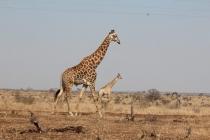Sudafrica_3217_ZA_KrugerNationalPark