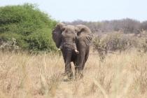 Sudafrica_3250_ZA_KrugerNationalPark